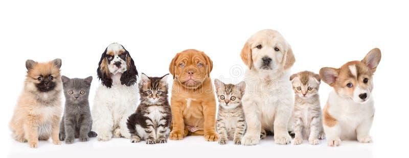 Grupp av katter och hundkapplöpning som i rad sitter Isolerat på vit royaltyfria foton