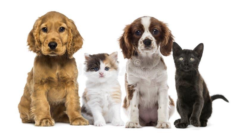 Grupp av kattungar och hundkapplöpning