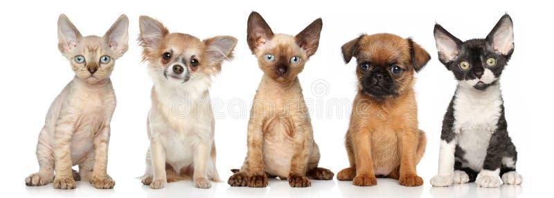 Grupp av kattunge och valpar på en vit bakgrund royaltyfri fotografi