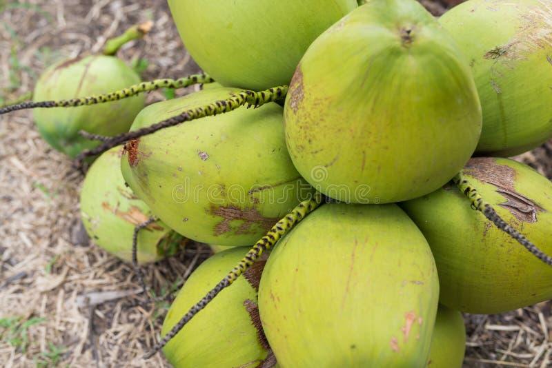 Grupp Av Kokosnötter Arkivbilder