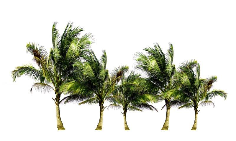 Grupp av kokospalmer som växer upp på stranden som isoleras på vit bakgrund arkivbild