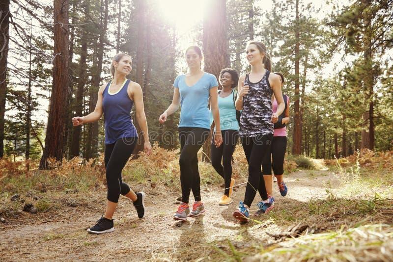 Grupp av kvinnalöpare som går i en skog som talar, nära övre royaltyfria bilder