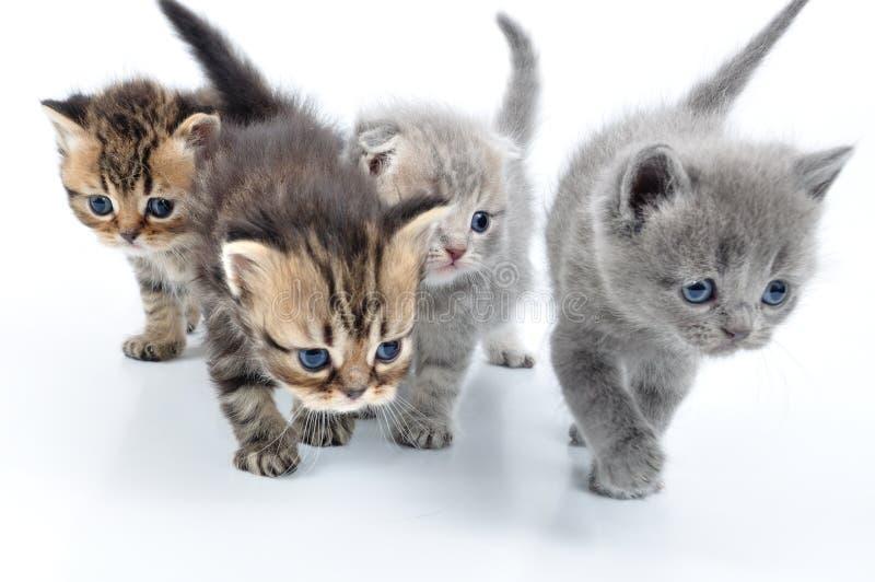 Grupp av lilla kattungar arkivfoton