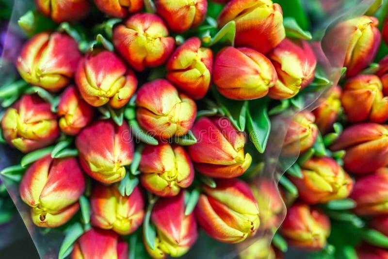 Grupp av många härliga nya orange tulpan Grossist- och detaljhandelblommalager Blomsterhandel eller marknad Tjänste- begrepp för  arkivbild