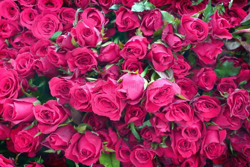 Grupp av många rosa rosa bukett royaltyfria foton