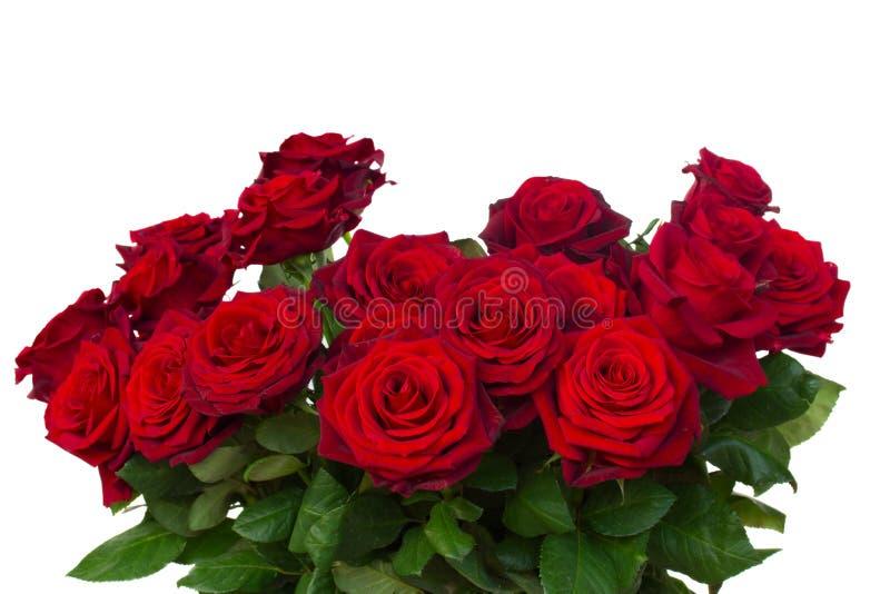 Grupp av mörker - röda rosor stänger sig upp royaltyfri foto