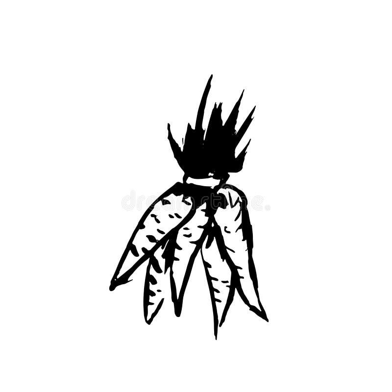 Grupp av morötter Grungesymbol också vektor för coreldrawillustration vektor illustrationer