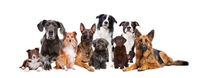 Grupp av nio hundkapplöpning royaltyfri fotografi