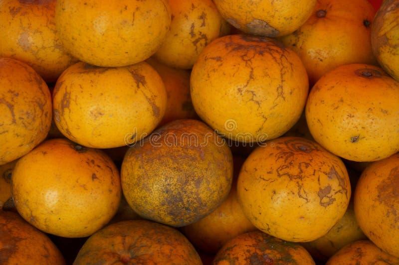 Grupp av ny apelsinbakgrund royaltyfri foto
