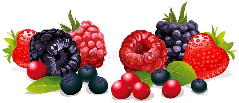 Grupp av ny frukt vektor illustrationer