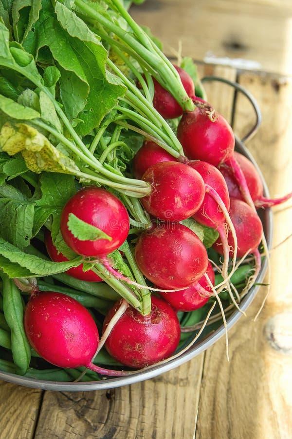 Grupp av nya organiska röda rädisor med vattendroppar i den Aluminum maträtten på den red ut träträdgårdtabellen i solljus royaltyfria foton