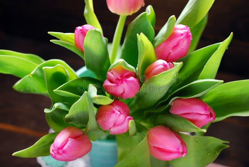 Grupp av nya rosa tulpan royaltyfri fotografi