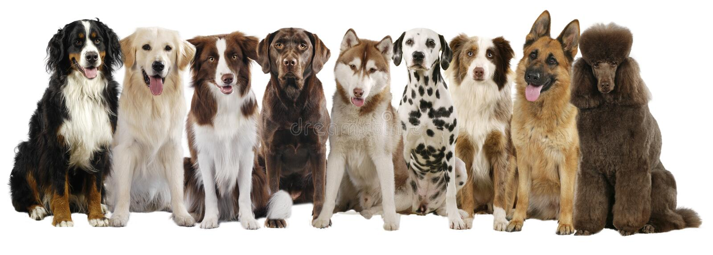 Grupp av olika stora hundavel royaltyfri bild