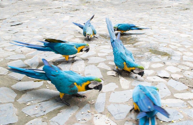 Grupp av papegojan fotografering för bildbyråer