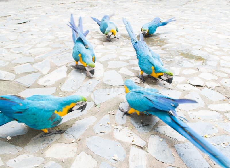 Grupp av papegojan royaltyfri bild