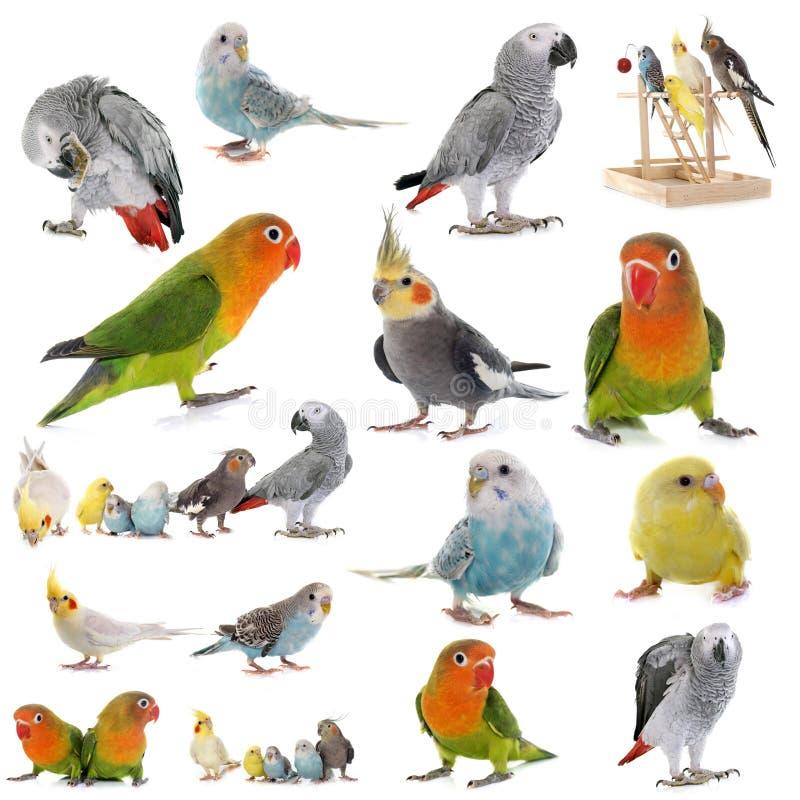 Grupp av papegojor arkivfoto