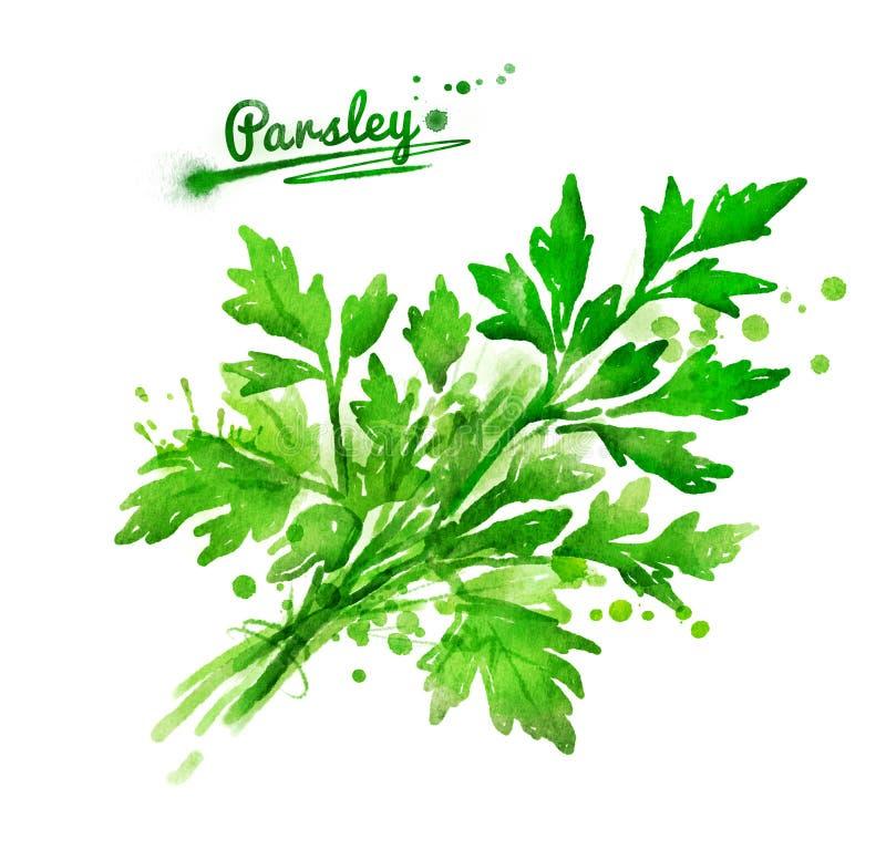 Grupp av parsley stock illustrationer