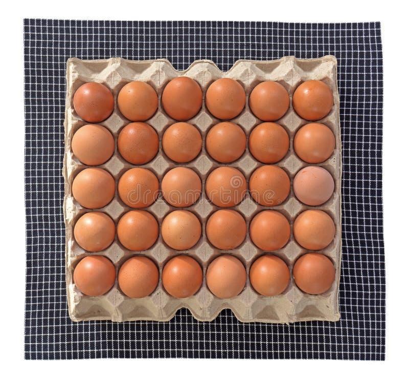 Grupp av rå ägg i papp arkivfoto
