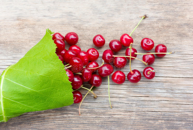 Grupp av röda mogna bärkörsbär med svansar i de gröna sidorna av kardborren arkivfoto