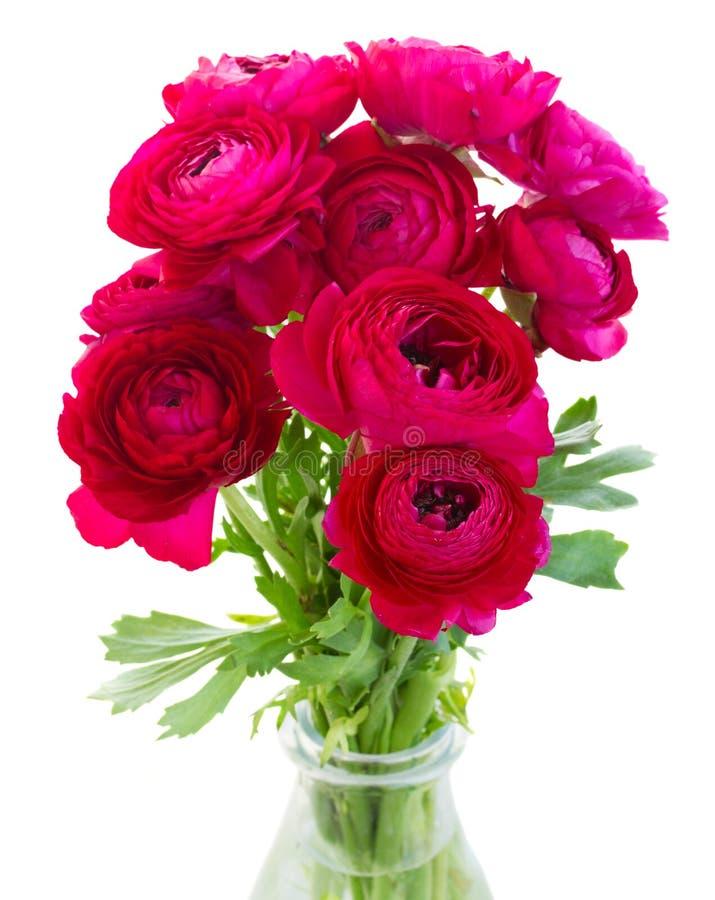 Grupp av rosa ranunculusblommor royaltyfria foton