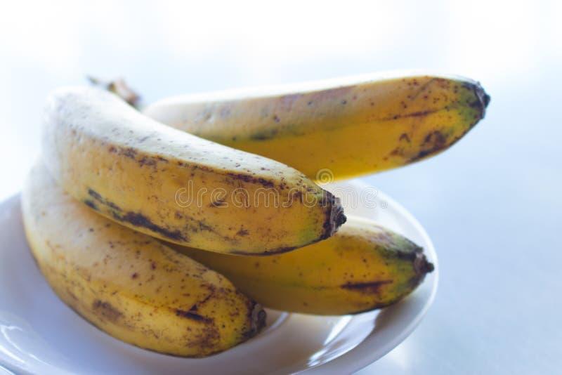 Grupp av söta mogna bananer Smakliga bananer på den vita plattan på tabellen Begrepp f?r tropiska frukter Exotisk frukost på trop fotografering för bildbyråer