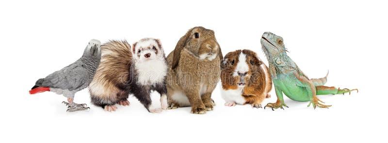Grupp av små hemhjälphusdjur över vit royaltyfri bild