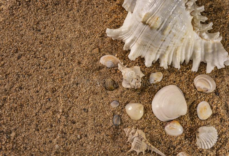 Grupp av snäckskal på strandsand Selektiv fokus på det vita havet Shell And Copy Space arkivbild