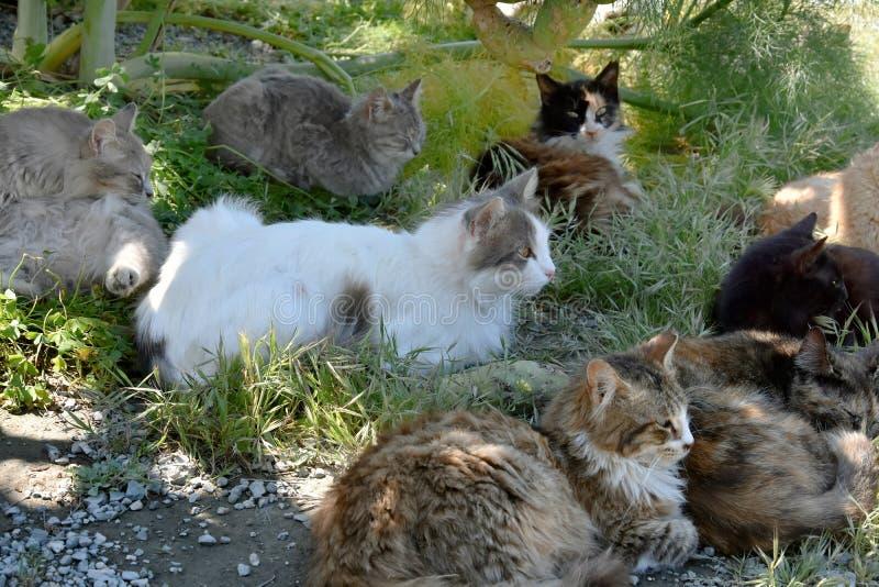 Grupp av tillfälliga katter royaltyfri fotografi