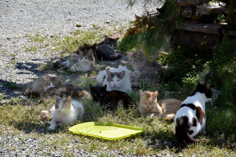 Grupp av tillfälliga katter royaltyfria foton