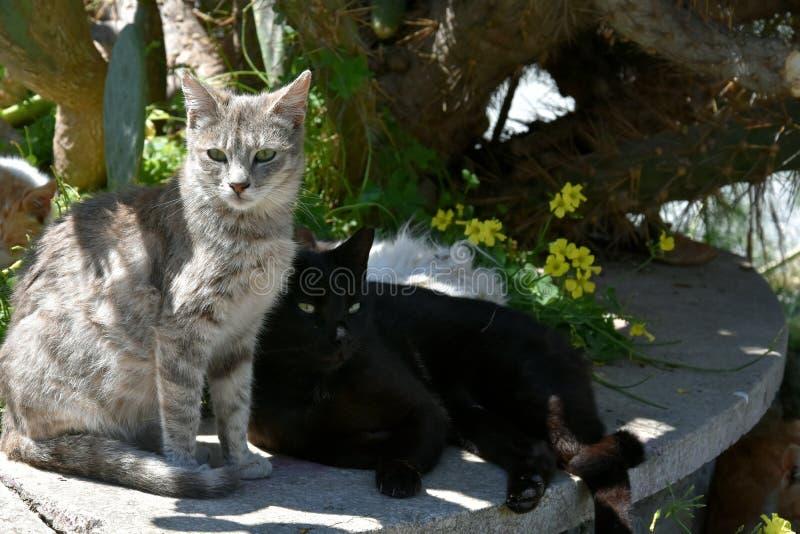 Grupp av tillfälliga katter royaltyfri bild