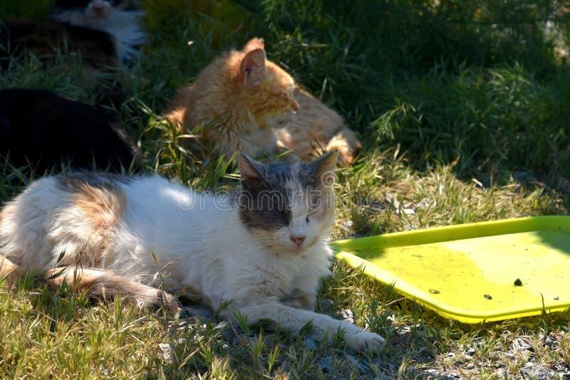 Grupp av tillfälliga katter arkivfoton