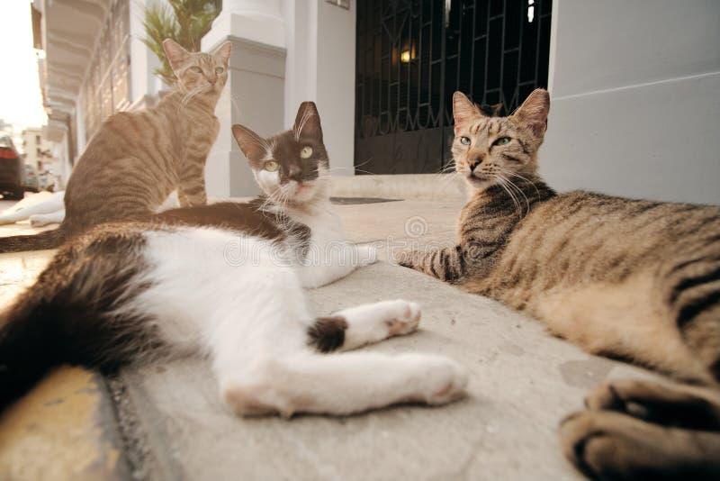 Grupp av tillfälliga katter som kopplar av på gatatrottoaren på solnedgången royaltyfria bilder