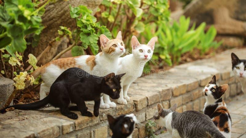 Grupp av tillfälliga katter som sitter på banatrottoarkant som ser upp som someo royaltyfri bild