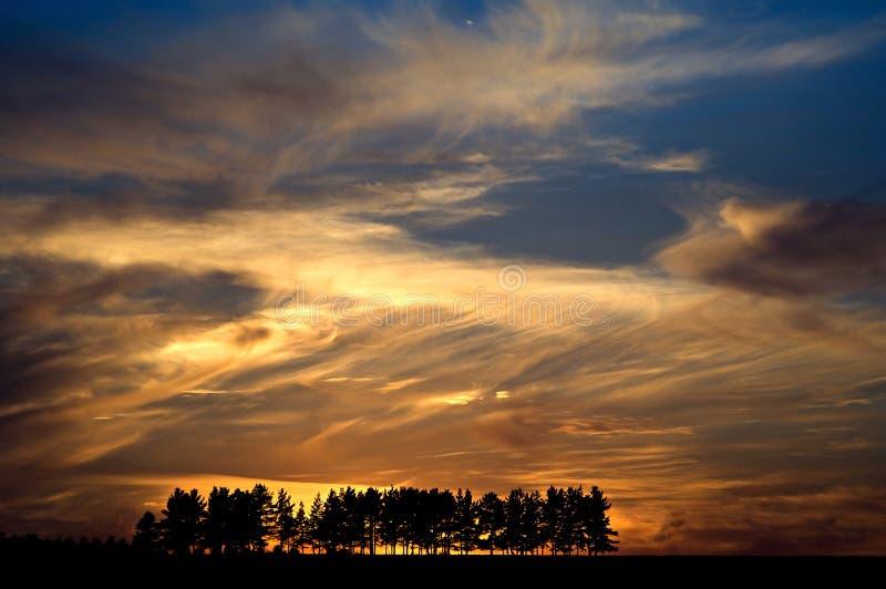 Grupp av träd på solnedgången royaltyfria bilder