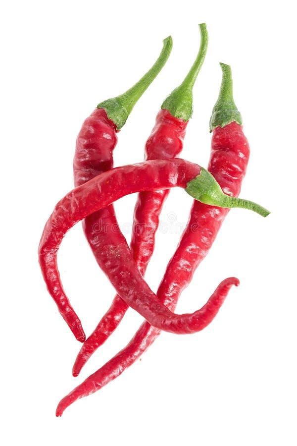 Grupp av tre beträffande peppar för chili som isoleras på vit bakgrund som beståndsdel för packedesign arkivbild