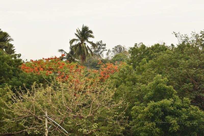 Grupp av trees royaltyfri foto