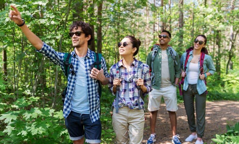 Grupp av vänner med ryggsäckar som fotvandrar i skog arkivfoto