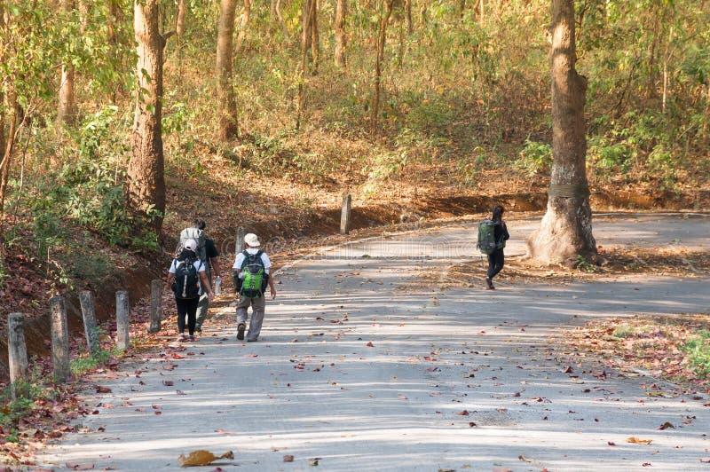 Grupp av vänner som går med ryggsäckar i den asia skoghöstsäsongen från baksida royaltyfri fotografi