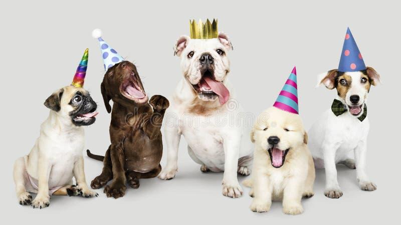 Grupp av valpar som firar nytt år tillsammans royaltyfria bilder