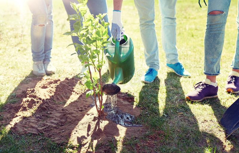Grupp av volontärer som planterar och bevattnar trädet royaltyfria bilder