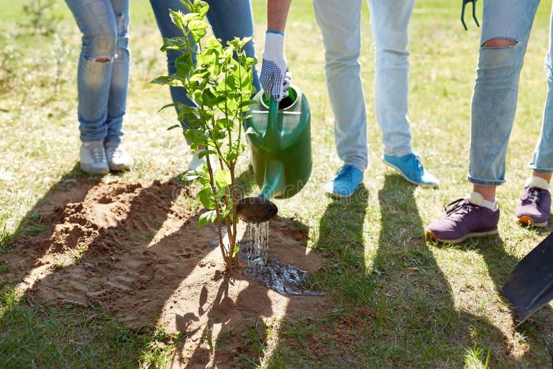 Grupp av volontärer som planterar och bevattnar trädet royaltyfri bild