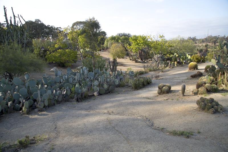 Grupp Catcus som växer i balboaen Park City San Diego CA arkivbild