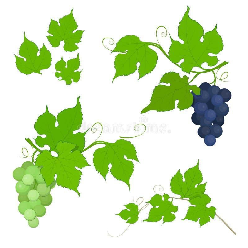 Grupp för röda och vita druvor med sidor royaltyfri illustrationer