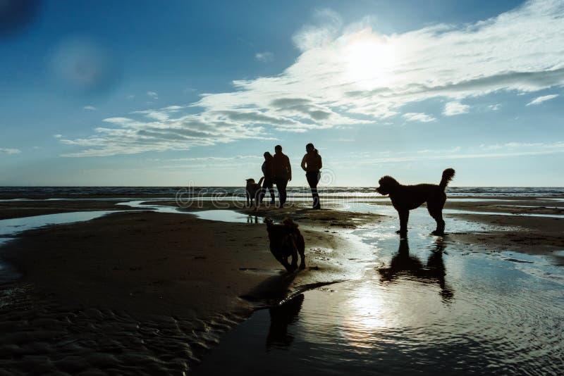 Grupp människor med deras hundkapplöpning på stranden arkivfoton