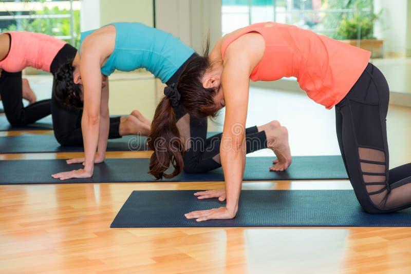Grupp människor som gör yogakatten, poserar i studioutbildningsrum, Bal royaltyfri fotografi