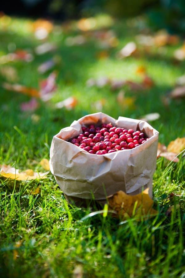 gruppcranberries royaltyfri foto