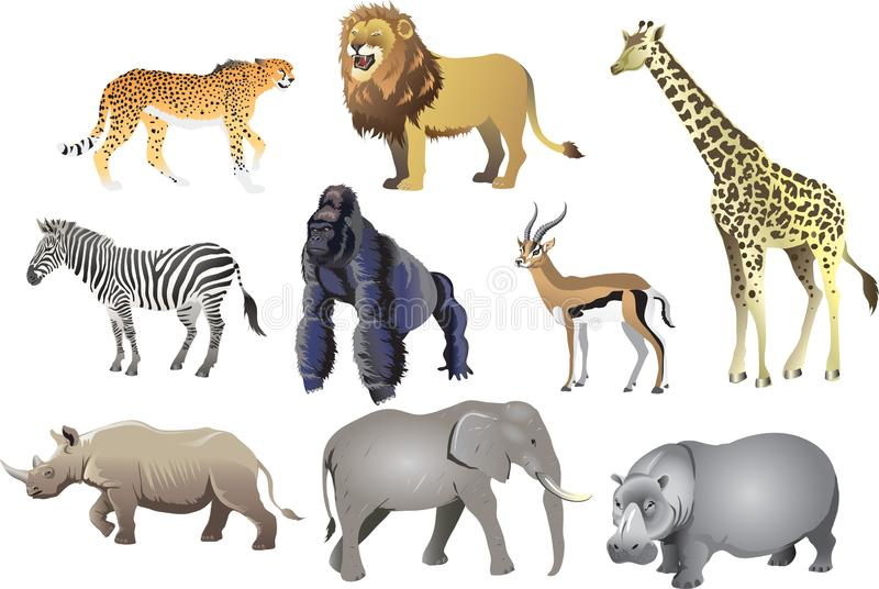 Gruppe afrikanisches tierisches wildes Leben, Gepard, Löwe, Giraffe, Zebra, Gorilla, Antilope, Nashorn, Elefant, Nilpferd - Vekto lizenzfreie abbildung