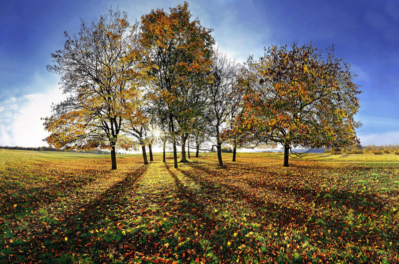 Gruppe Bäume im Herbst stockfotos