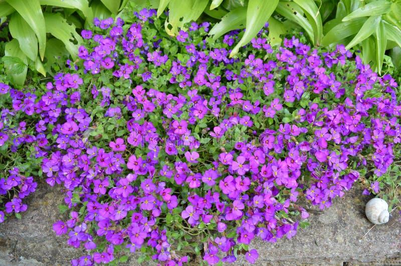 Gruppe Blumen lizenzfreies stockbild