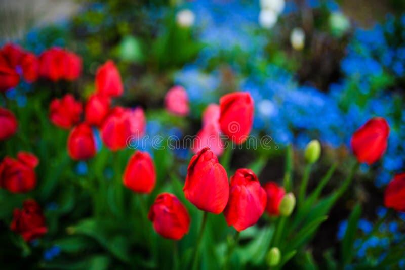 Gruppe der bunten Tulpe Blumentulpe beleuchtet durch Sonnenlicht im Blumengarten lizenzfreies stockfoto